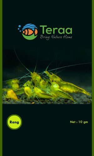 Teraa – Rang 300x500 - Rang Shrimp Food 10gm