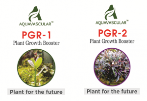Aquvascular PGR1 and PGR2