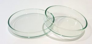 Shrimp Feeding Dish (Glass)