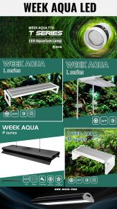 WEEK Aqua LED in India