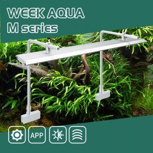 WEEK AQUA M Pro Series Double Bracket